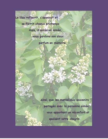 Message de condoléances… Le lilas refleurit